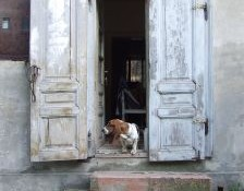Pet Lover House Hunting