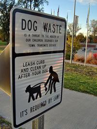 Woman picking up dog poop