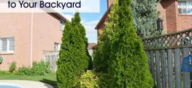 Screening Trees: How to Get Privacy In Your Backyard