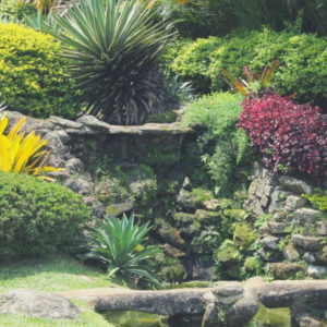 7 Landscaping Tips for Beginners