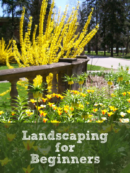 Landscaping tips and tricks all first-time homeowners should know.