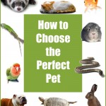 how-to-choose-perfect-pet