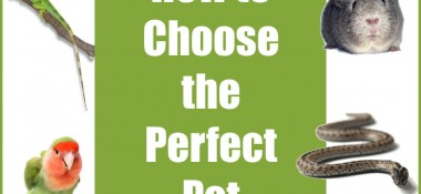 Choosing a Pet – Make the Right Choice as a Couple