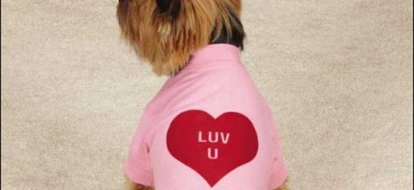 12 Valentine's Day Gifts for Your Dog