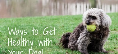 4 Ways to Exercise With Your Dog