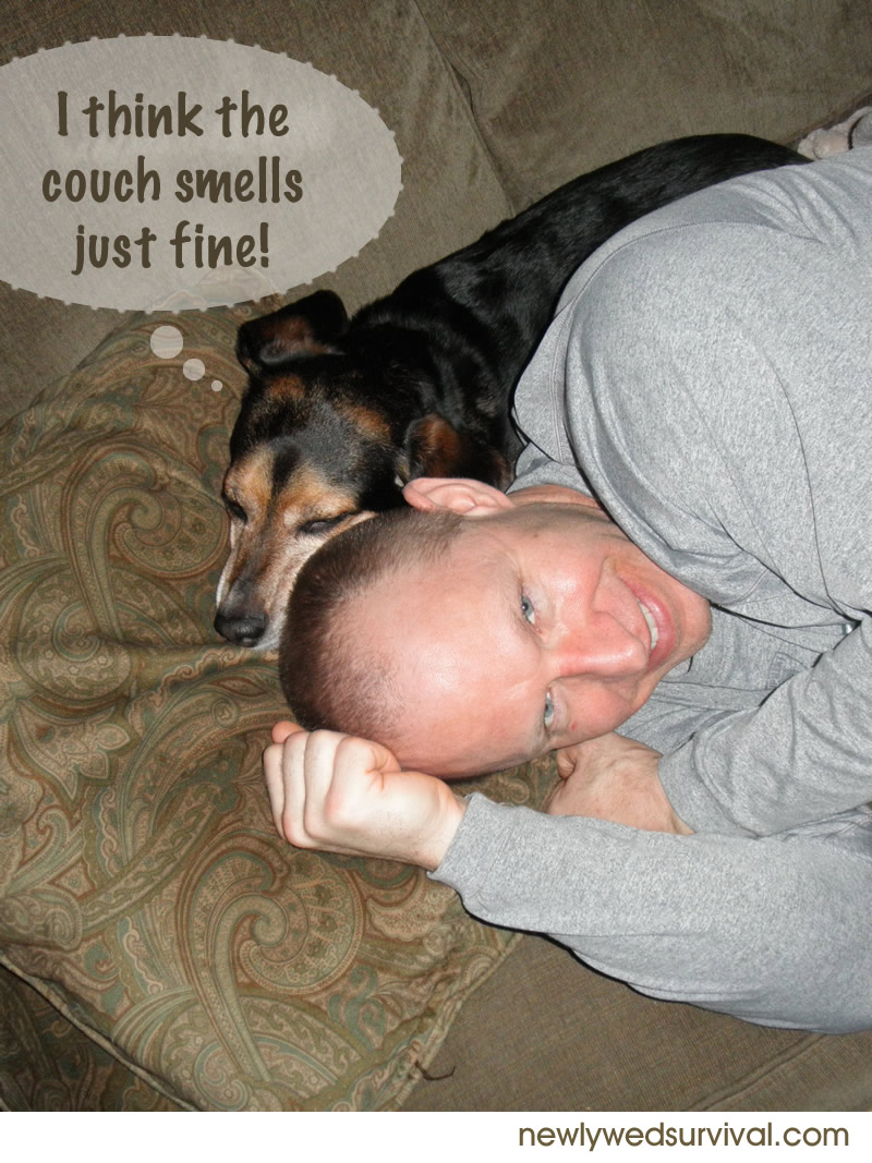 Ways to remove pet stains and odors around your home