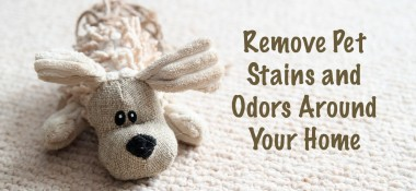 Ways to remove pet stains and pet odors around your home