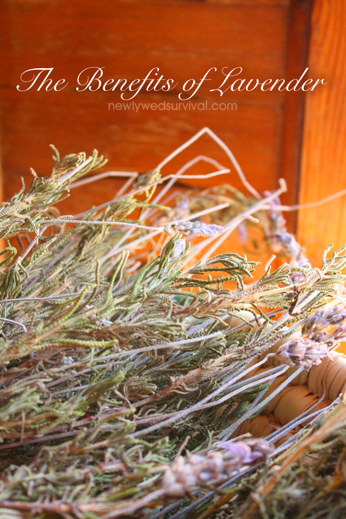 The Benefits of Lavender + a Recipe #newlywedsurvival
