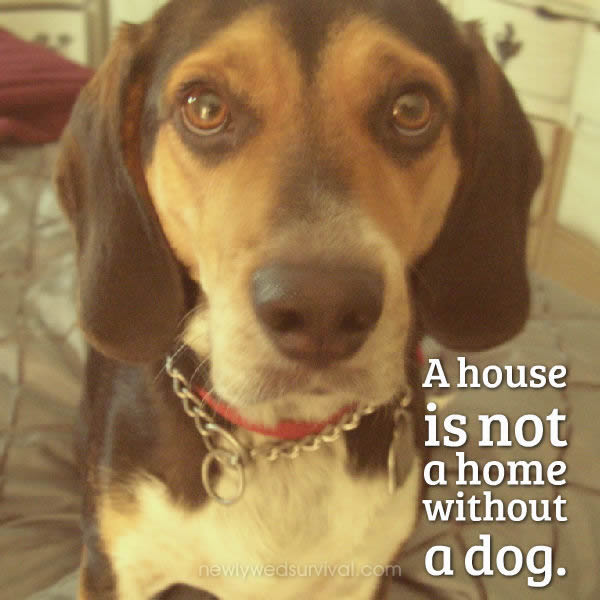 A house is not a home without a dog #ScienceHappens ad