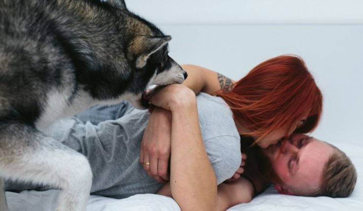 Could Your Dog be Ruining Your Marriage?