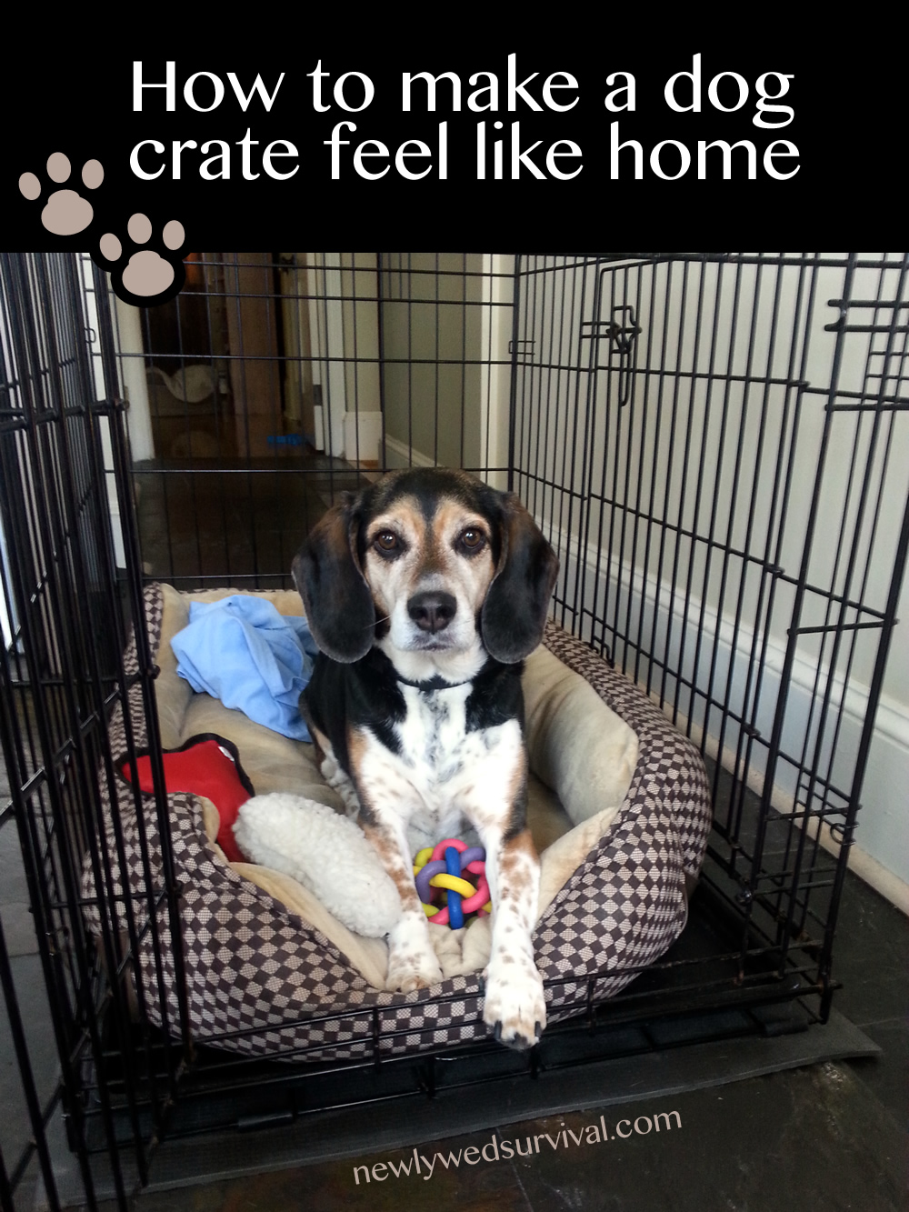 How to make a dog crate feel like home #CrateHappyPets #ad