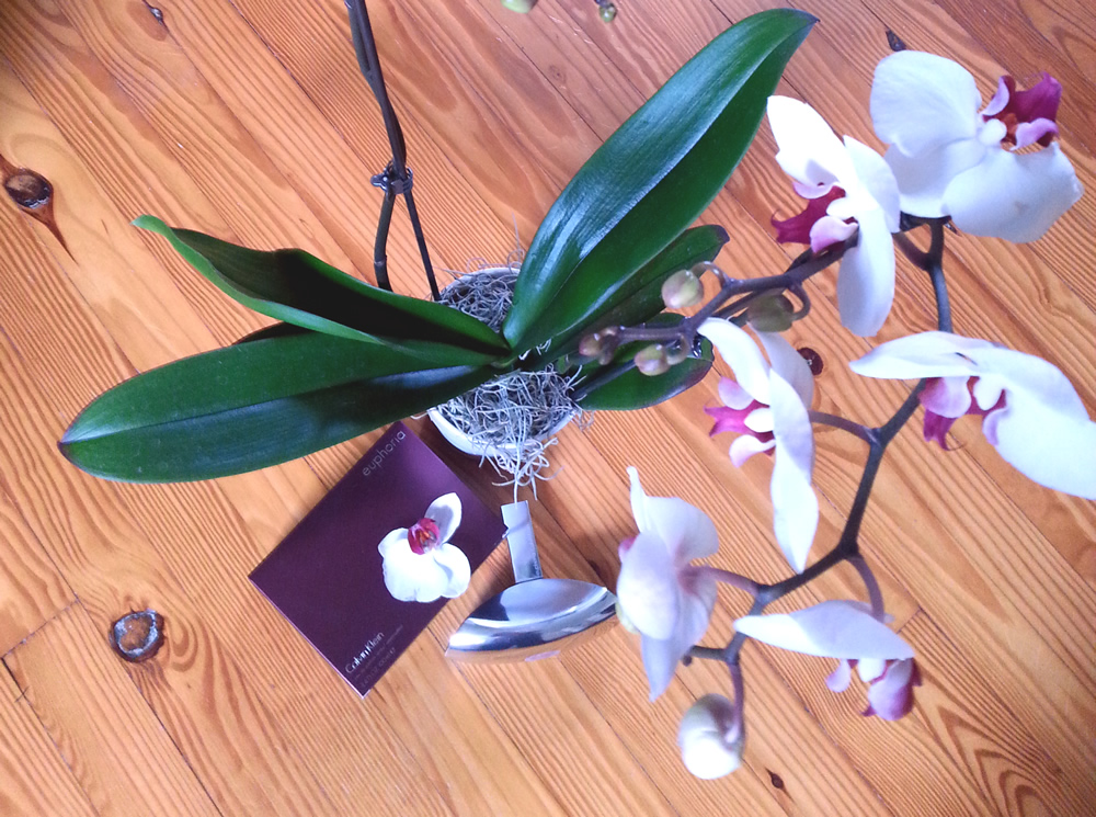 Limited time: free orchid with purchase of euphoria Calvin Klein #euphoria4moms #IC @CalvinKlein