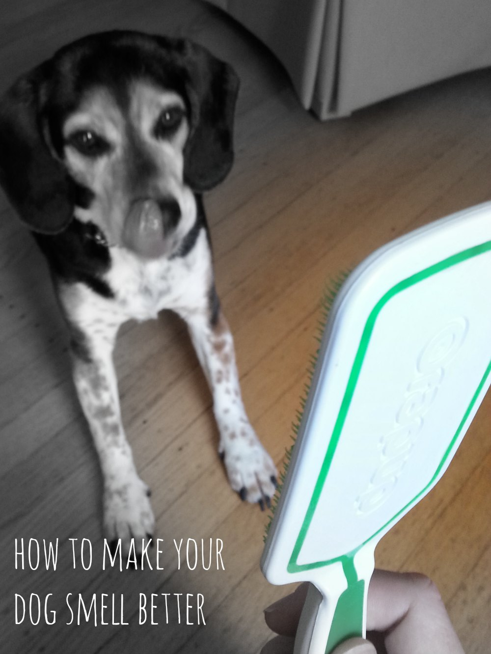 How to Make Your Dog Smell Better #DogGoneBreath #cbias