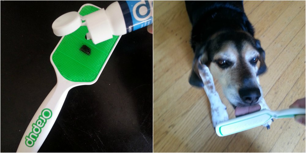 Using the Orapup brush and Lickies to get rid of dog bad breath #DogGoneBreath #cbias