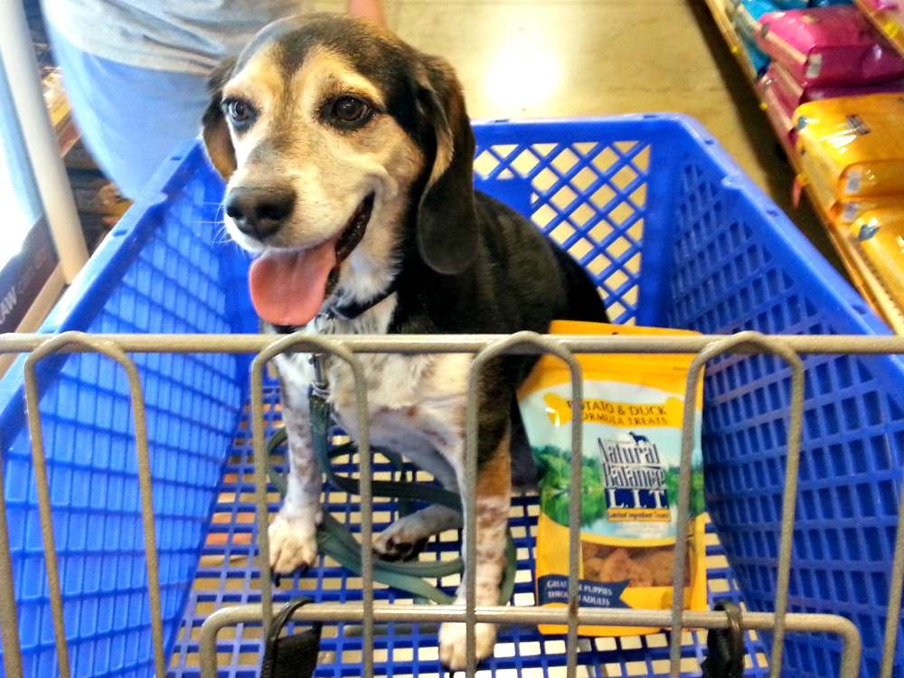 Honey with Natural Balance Limited Ingredient Treats at Petsmart #PetSmartStory