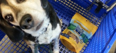 Honey's #PetSmartStory with Natural Balance