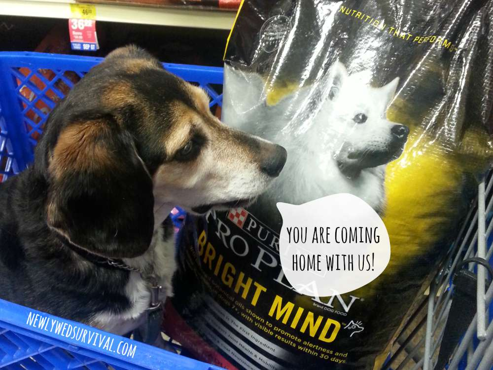 Honey with Purina Pro Plan Bright Mind #BrightMind #CollectiveBias