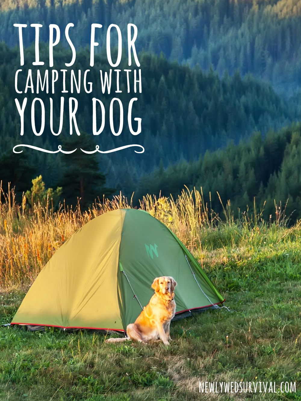 Tips for camping with your dog #PinnacleHealthyPets