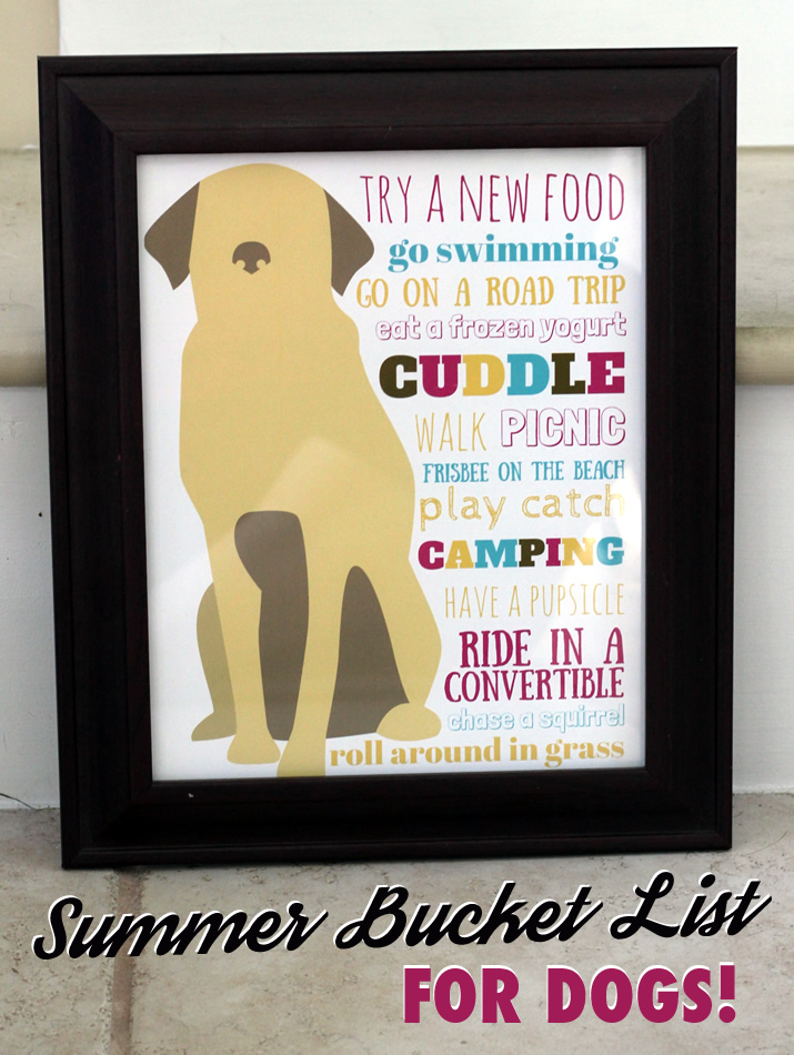 Summer Bucket List for Dogs