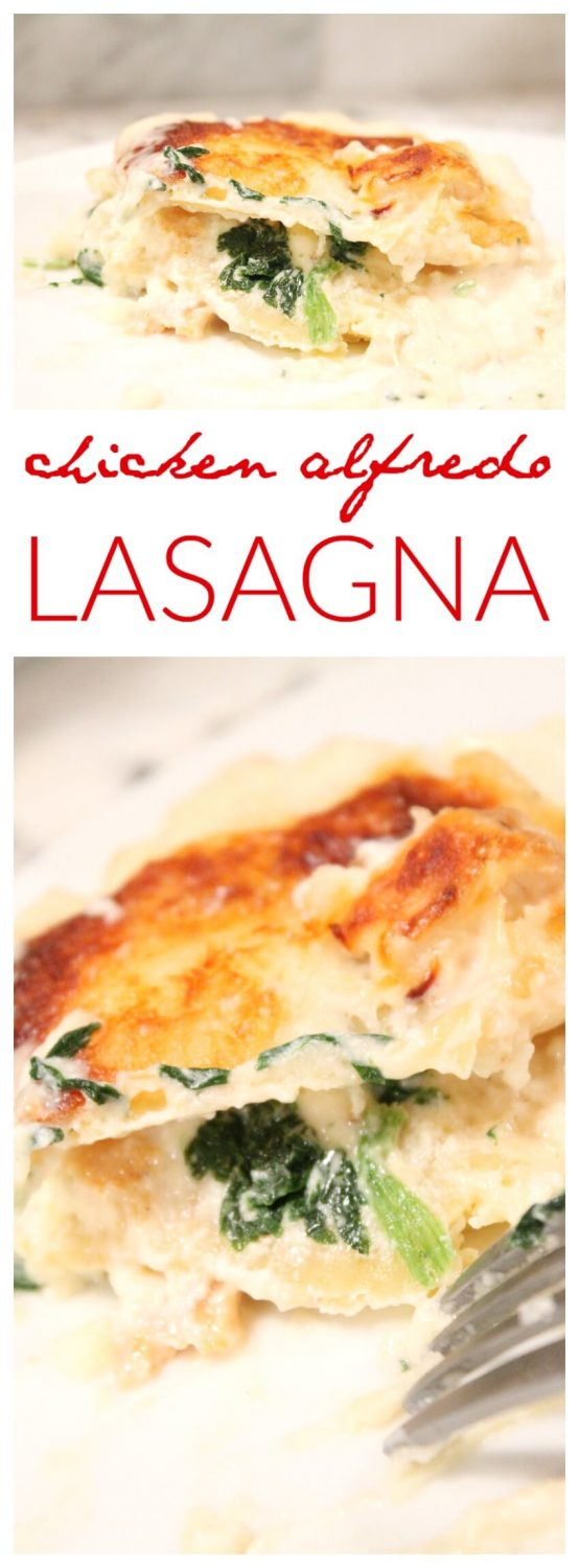 Chicken Alfredo Lasagna Recipe