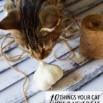 10 Things your cat should never eat.