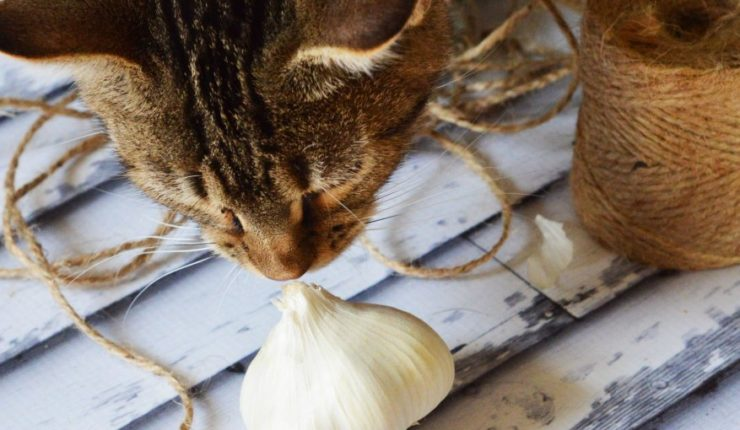 10 Things You Should Never Feed Your Cat