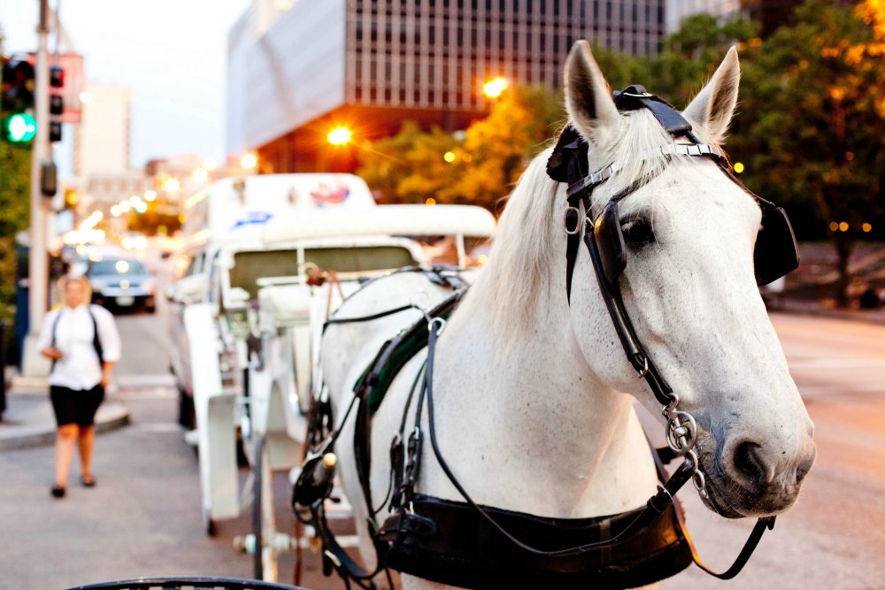 Carriage Ride in St Louis - fun date idea!