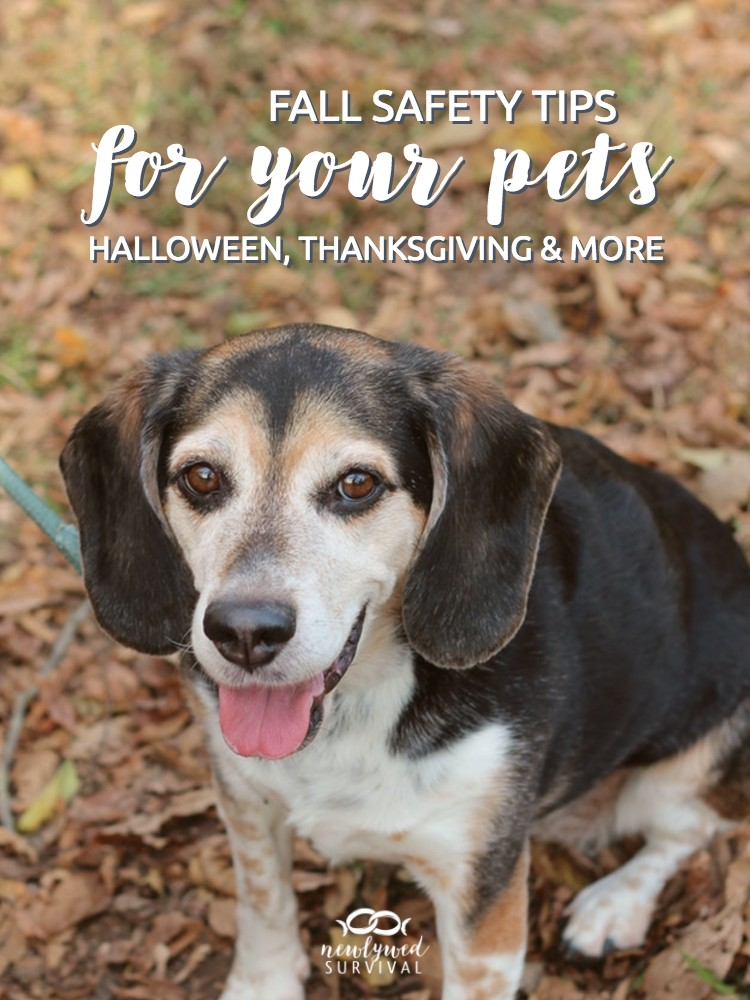 Fall Safety Tips for Your Pets